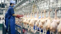 Cảnh báo nguy cơ khan hiếm cục bộ thịt gà trong dịp Tết Nguyên đán 2022