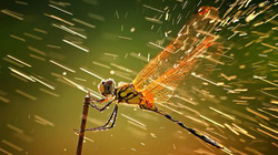 10 bức ảnh thiên nhiên đẹp nhất tháng 12.2011
