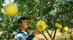 Từ buôn hoa quả chuyển sang mở trang trại tự trồng