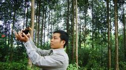 Yêu rừng, rừng trả lãi