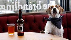 Bán bia cho... chó