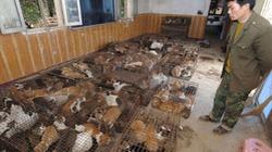 """Bốn triệu tiểu hổ bị """"tùng xẻo"""" tại Trung Quốc"""