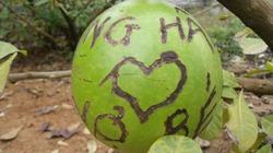 1001 cách tỏ tình... nham nhở trên đào tiên ở chùa Bái Đính
