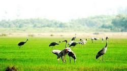 200 chim quý trong sách đỏ thế giới đến ĐBSCL trú ngụ