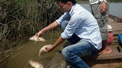 Cá sông Bàn Thạch chết hàng loạt