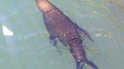 Cô bồ Shakira của Pique bị sư tử biển tấn công