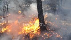 Hết rừng thì... khỏi lo cháy