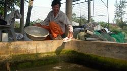 Lão nông 80 tuổi thu tiền tỷ từ cá giống