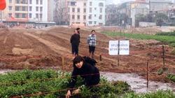 Hà Nội: Hàng trăm ngôi mộ biến mất trong đêm