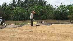 Ngày đầu mua tạm trữ 1 triệu tấn gạo: Dấu hiệu lạc quan