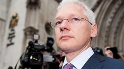 Trùm WikiLeaks sắp chạy đua vào Thượng viện
