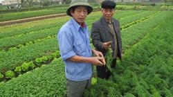 Nông dân làm quen với sản xuất VietGAP
