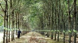 Công ty Cao su Chư Sê chung tay xây dựng nông thôn mới