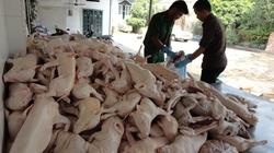"""TP.HCM: Hơn 220 con heo sữa lậu bị """"tóm gáy"""""""