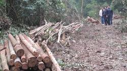 Ngang nhiên chặt phá rừng của dân