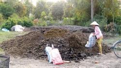 Phân trâu khô cũng bị thương lái Trung Quốc mua