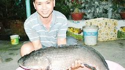 Bắt được cá lóc nặng 9 kg trong vườn nhà