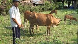 Hội đồng hành  cùng  nông dân