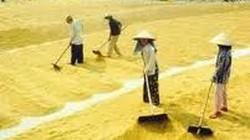 Hốt bạc từ dịch vụ cho thuê sân phơi lúa