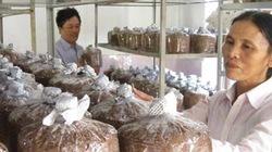Hà Tĩnh: Cấp chứng chỉ nghề trồng nấm cho 28 nông dân