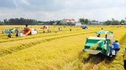 Xây dựng cánh đồng lớn tại ĐBSCL: Lãi tăng, chi phí giảm