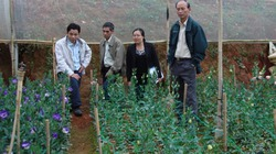 Lâm Đồng: Mở rộng vùng hoa về phía Langbian