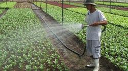 TP.HCM: Dành hơn 82.000ha đất cho sản xuất nông nghiệp