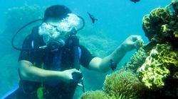Kỳ thú  lặn biển Nha Trang