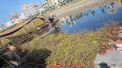 TP.HCM: thuyền, hoa tấp nập nơi bến sông