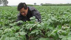 Kết nối nông dân - doanh nghiệp