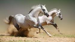 Con ngựa trong tâm thức dân gian người Việt