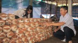 Ninh Bình: Cho vay xây dựng nông thôn mới 7.530 tỷ đồng