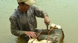 Chuyện kỳ lạ về anh mù - sát thủ của cá sông
