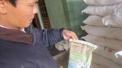 Nông dân lo lắng  vì lúa giống ít nảy mầm