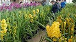 Hà Nội: Tổ chức 47 chợ hoa