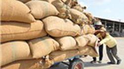 Đề xuất không bỏ tạm trữ lúa gạo