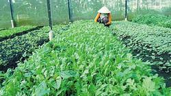 Lâm Đồng: Chỉ 3% số mẫu rau không an toàn