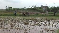 Nam Định: Cơ bản hoàn thành dồn điền, đổi thửa