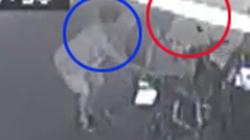 Clip: Người phụ nữ vừa hô to, vừa giằng lại xe từ tên trộm