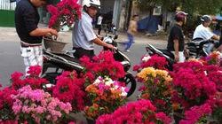 Chợ hoa xuân  tấp nập bán - mua