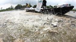 ĐBSCL: Nâng diện tích nuôi trồng thủy sản lên 800.000ha mặt nước