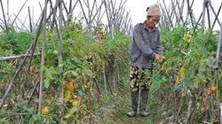 Cải thiện môi trường từ dự án CEDO: Nông dân khỏe hơn và tiết kiệm chi phí