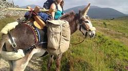 Kỳ lạ cô gái đi du lịch hơn 1.600 km với... con lừa
