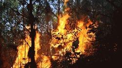 Lửa dữ liên tục thiêu rụi 70 ha rừng Quảng Ninh