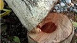 Về tin đồn đi đánh cá bắt được gỗ sưa tiền tỷ: Bỏ việc, lặn suối tìm... lộc trời