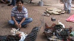 TP.HCM: Phá trường gà vùng ven, tạm giữ 30 người