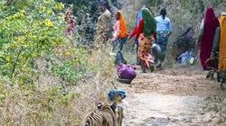 Bắn chết con hổ giết người hàng loạt