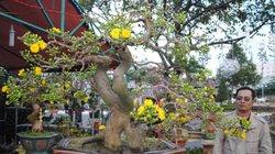 Độc sầu mai bonsai Bình Định