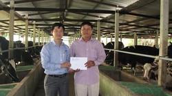 Vinamilk chăm lo Tết cho người chăn nuôi bò sữa
