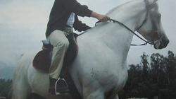 """Chuyện """"Vua cà phê"""" chăm ngựa"""